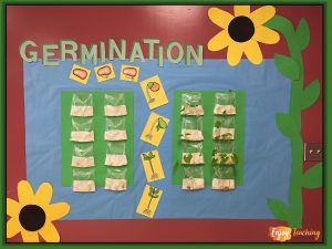 Enjoy Teaching Plants - Germination Bulletin Board