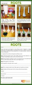 Enjoy Teaching Plants - Roots