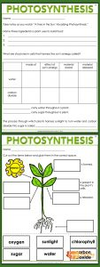 Enjoy Teaching Plants - Photosynthesis