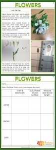 Enjoy Teaching Plants - Flowers