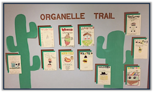 Organelle Trail Display
