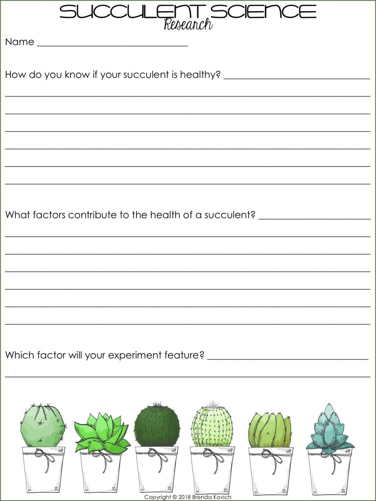 Succulent Science Activities 3