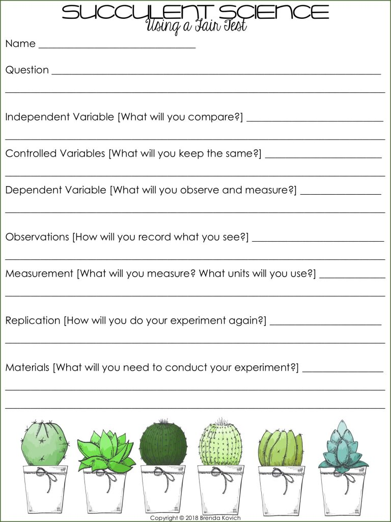 Succulent Science Activities 4