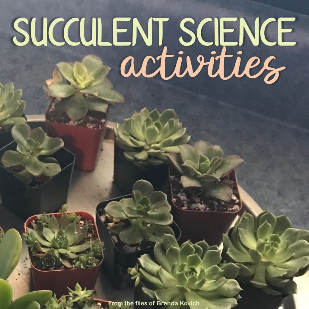 Succulent Science Activities Cover