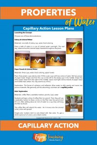 Kids explore capillary action three ways: as colored water moves up the veins in a stalk of celery, as it is absorbed by paper towel, and in a chromatography experiment.